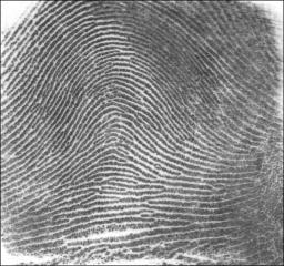 Fingerprint Arch