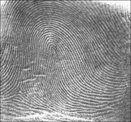 Fingerprint Loop