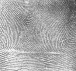 Fingerprint Whorl